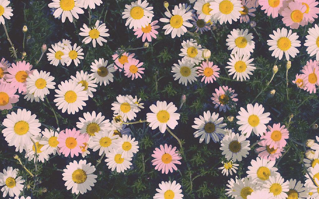 wallpapere-pentru-iPhone-19