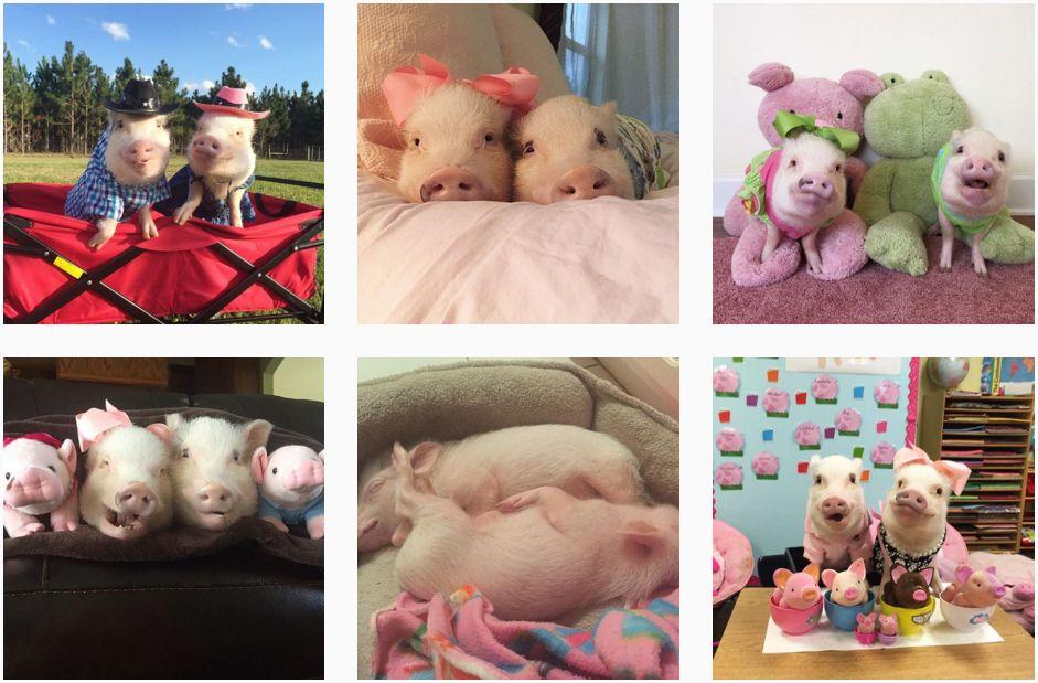 animale-simpatice-de-urmarit-pe-instagram