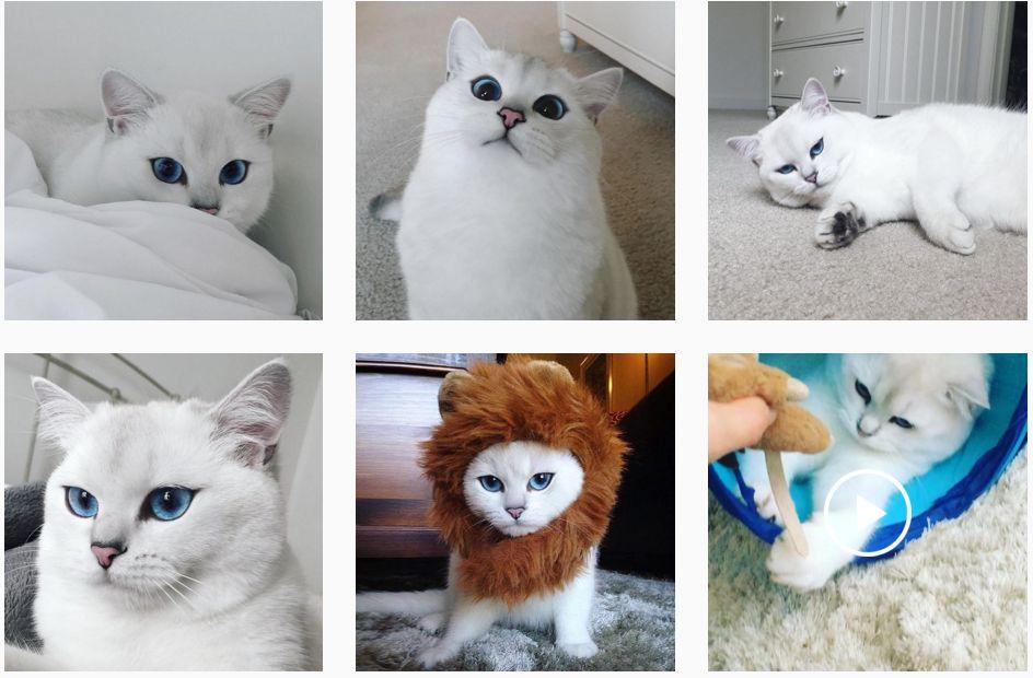 Animale simpatice de urmărit pe Instagram